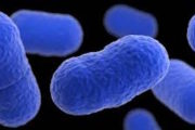 Salud confirma 29 nuevos casos de Listeria monocytogenes en Andalucía