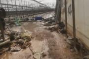 El temporal deja pérdidas millonarias en la agricultura