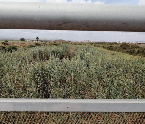 Vecinos de Vera exigen la limpieza urgente del cauce del río Antas para evitar un desastre