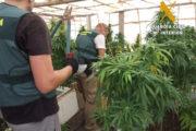 Localizan 500 plantas de marihuana en una mina abandonada en Cuevas del Almanzora