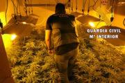 Detienen a dos vecinos de La Mojonera por cultivar 295 plantas de marihuana en su vivienda