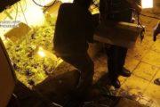 Golpe al cultivo de marihuana en Gádor con 5 detenidos y 1.252 plantas intervenidas