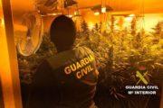 Detenidas dos personas por cultivar 171 plantas de marihuana en una vivienda de Roquetas de Mar