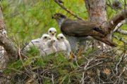 Aves, literatura y educación ambiental