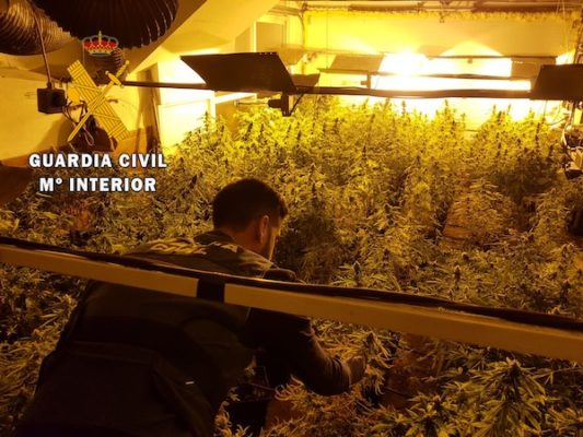 Marihuana OP_LUDUDA