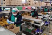 UGT Fica exige la máxima protección y reconocimiento a las trabajadoras del manipulado de Almería