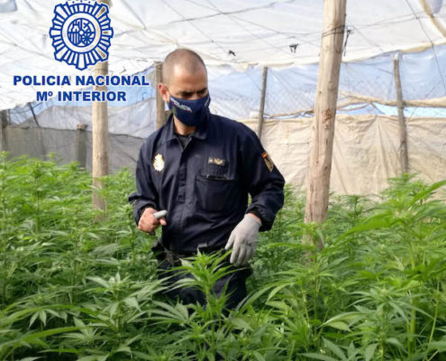 Policía entre marihuana