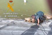 La Guardia Civil rescata a un perro atrapado en una balsa de riego