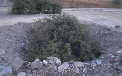 arbol enterrado