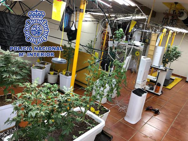 laboratorio marihuana
