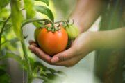 La UAL acoge unas jornadas agroalimentarias de carácter mundial