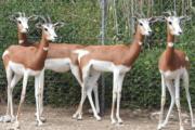 El CSIC celebra el 500 aniversario de la creación del Parque de Rescate de Fauna Sahariana